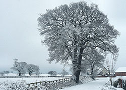 A photo of Church Lane in the snow in Woodford, Cheshire taken by Kris Hayward