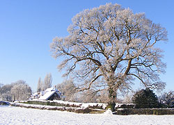 A photo of a frosty Church Lane in Woodford Cheshire - taken by Evelyn Frearson - January 2010