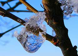 A photograph of an 'ice sapphire' taken in Blossoms Lane, Woodford Cheshire by Jenny Hayward
