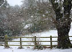 Woodford in the snow - Robin Berriman