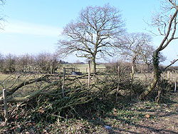Hedge layed on North West boundary 18-Mar-13 as part of the Woodford Community Centre Woodland Project
