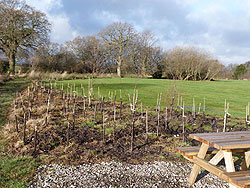 The copse part of the Woodford Community Centre Woodland Project - photo taken 1 Jan 13